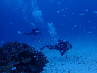 石垣島でのんびりダイビング-癒しの砂地.jpg